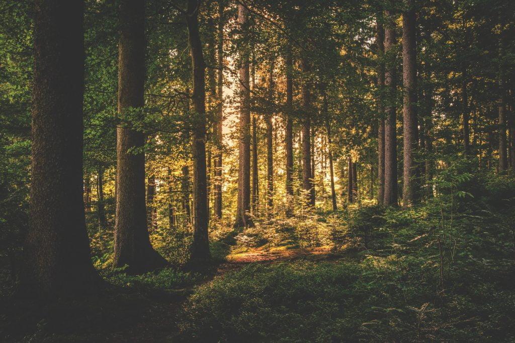 Spirituelle Nyheder - Chefen bliver spirituel - dr.dk
